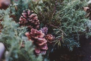 sonjanetzlafphotography_winterbreeze_159a