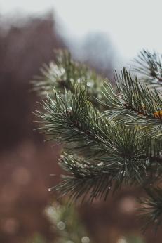 sonjanetzlafphotography_winterbreeze_49a