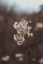 sonjanetzlafphotography_winterbreeze_50a